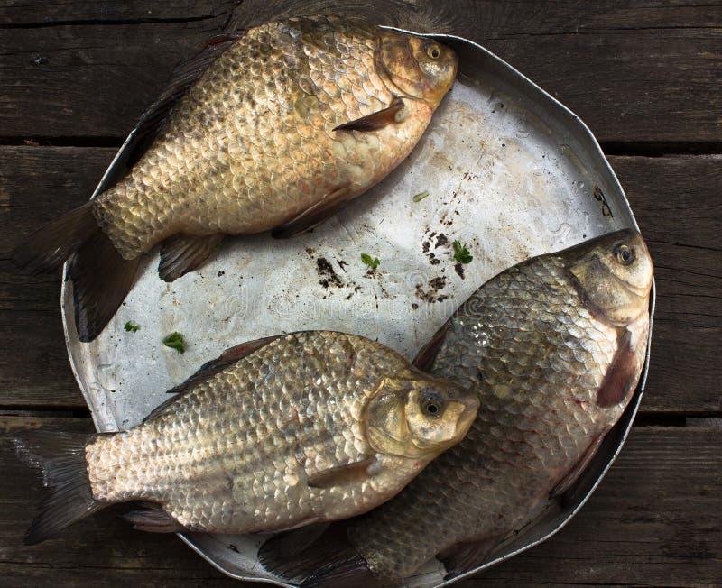 Trois poissons de rivière de carpe crucian crus dans une cuvette en aluminium ronde sur un OE image stock