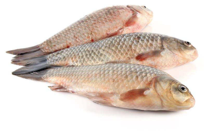 Trois poissons frais images stock