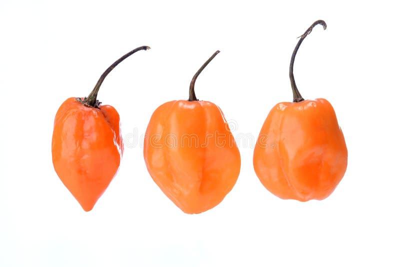 Trois poivrons de Habanero d'isolement sur le blanc photographie stock libre de droits