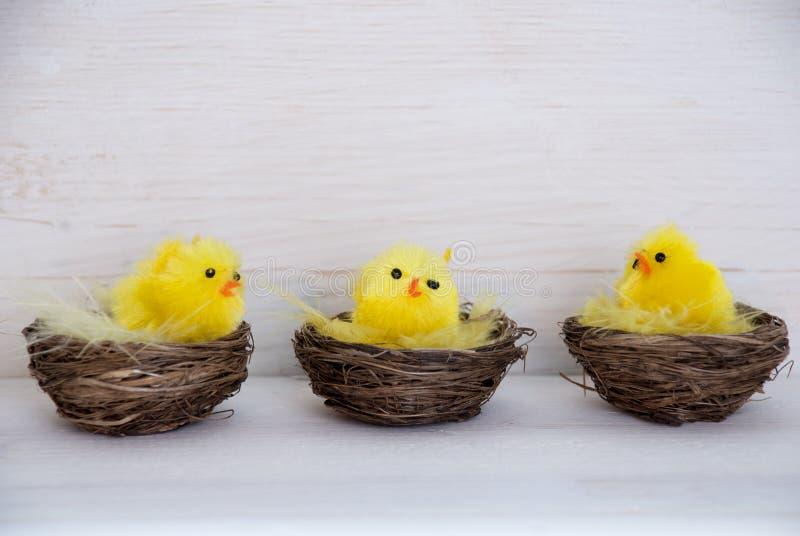 Trois poussins jaunes dans les paniers avec l'espace de copie photo stock