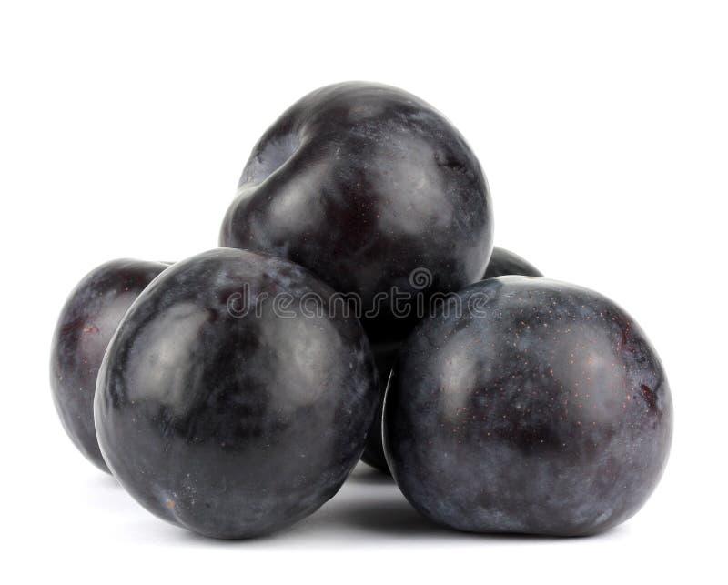 Trois prunes noires, d'isolement sur le fond blanc image libre de droits