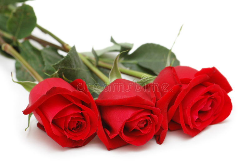 Trois roses d'isolement photographie stock