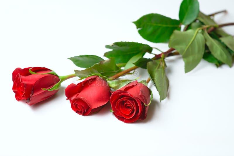 Trois roses pour elle photographie stock