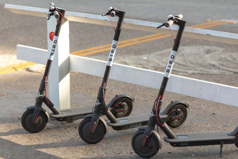 Trois scooters d'OISEAU en gros plan contre la barrière blanche photo libre de droits
