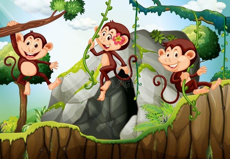 Trois singes accrochant sur la branche illustration stock
