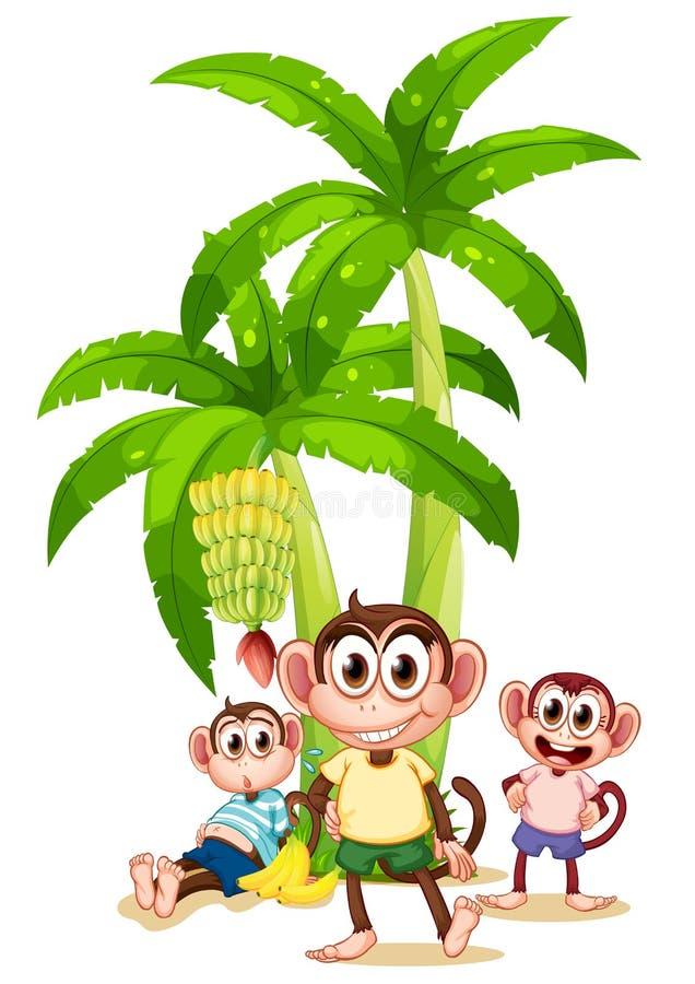 Trois singes près des bananiers illustration stock