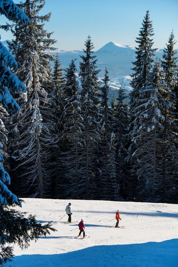 Trois skieurs empruntent l'itinéraire de station de sports d'hiver parmi la forêt puissante image stock