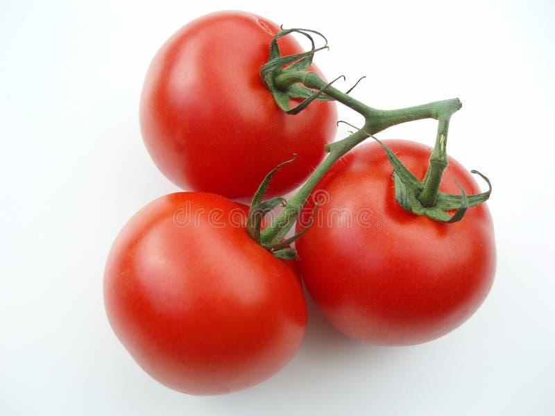 Trois tomates avec la tige images libres de droits