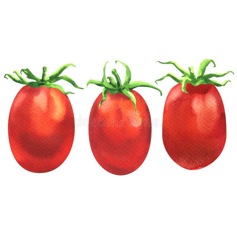 Trois tomates-cerises rouges juteuses fraîches dans la ligne, ingrédient d'aliment biologique, fin, aquarelle d'isolement et tiré illustration de vecteur