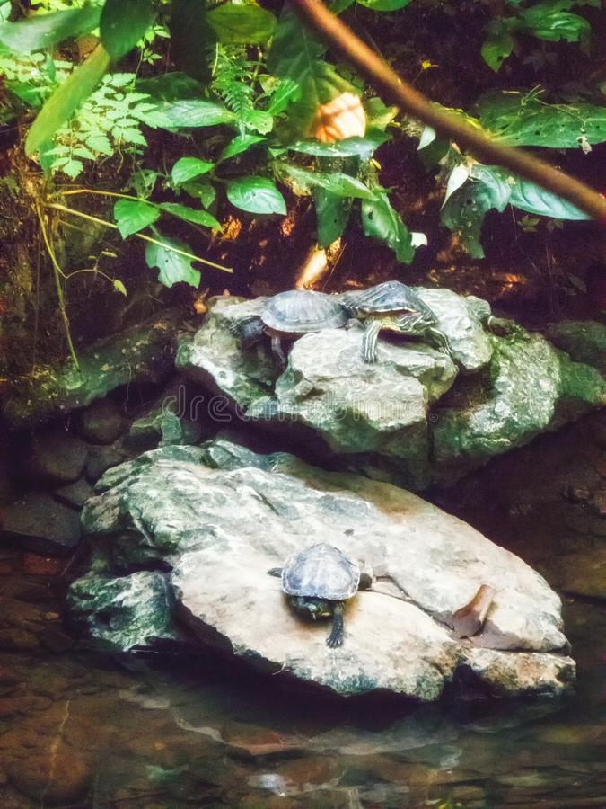 Trois tortues photographie stock