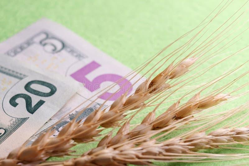Trois transitoires de mensonge de blé sur des dollars US Un plan rapproché de vingt et billets de cinq dollars et d'épillets de g images stock