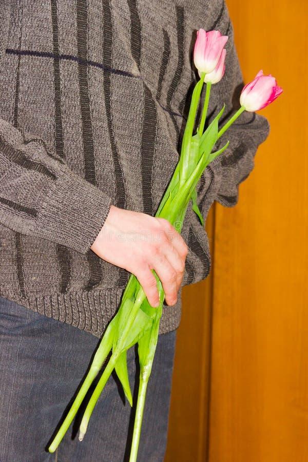 Trois tulipes dans une main masculine image stock