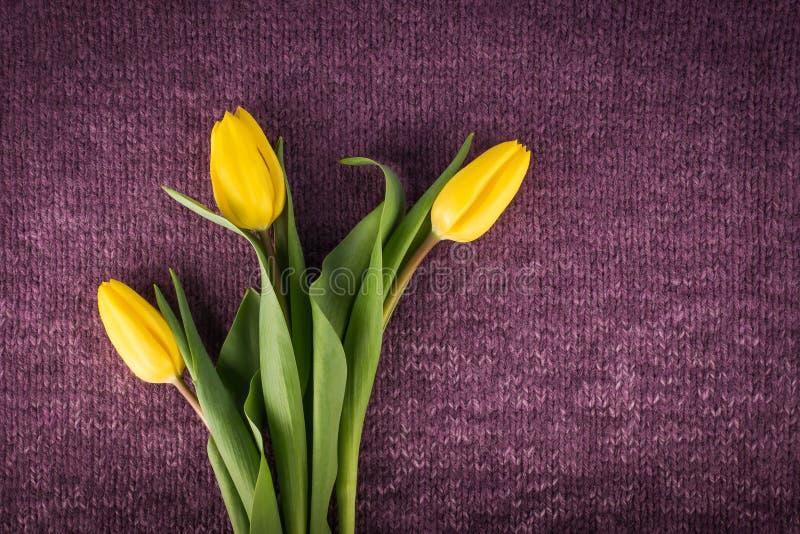 Trois tulipes jaunes de coupe fraîche images libres de droits