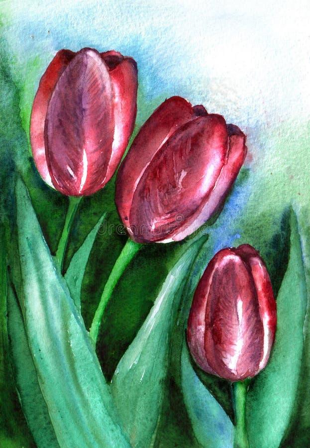 Trois tulipes pourpres sur un fond bleu et vert watercolor handmade illustration stock