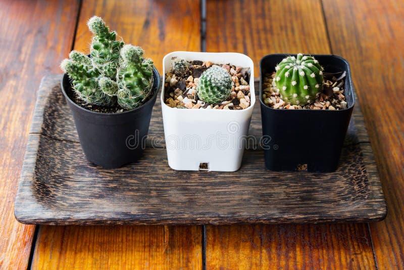 Download Trois Usines De Cactus Sur Le Fond En Bois Texturisé Image stock - Image du centrale, filtre: 87703369
