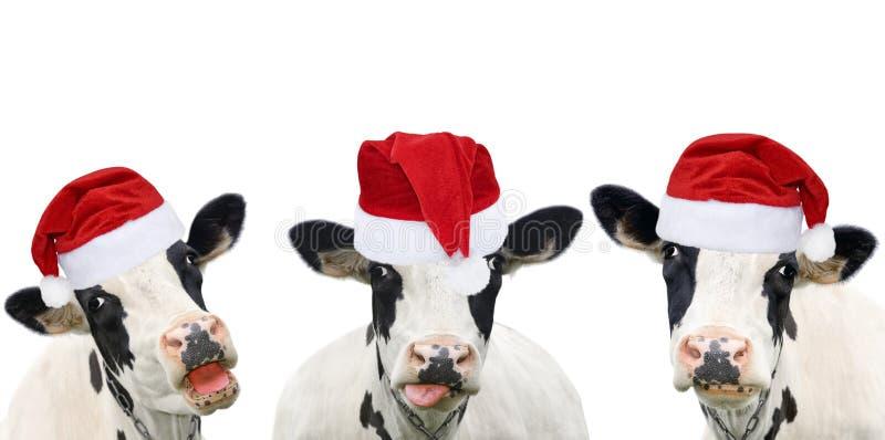 Trois vaches drôles dans les chapeaux de Noël photographie stock