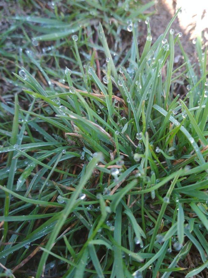 ?troit d'herbe de gisement de ros?e de profondeur Diamants de matin images libres de droits