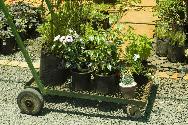 Trolley With Plants Stock Photo