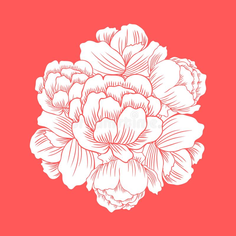 Trollius asiaticus flowers, Globeflower or Kupavna round frame, bouquet vector isolated on red background, Ranunculus or royalty free illustration