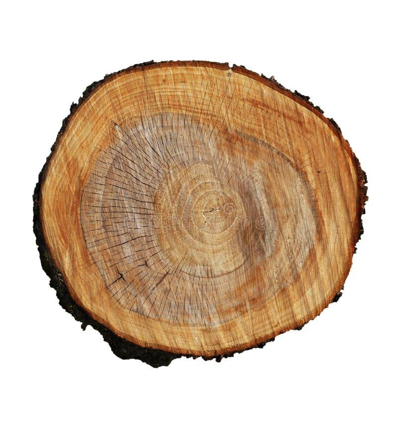 Tronçon d'arbre image libre de droits