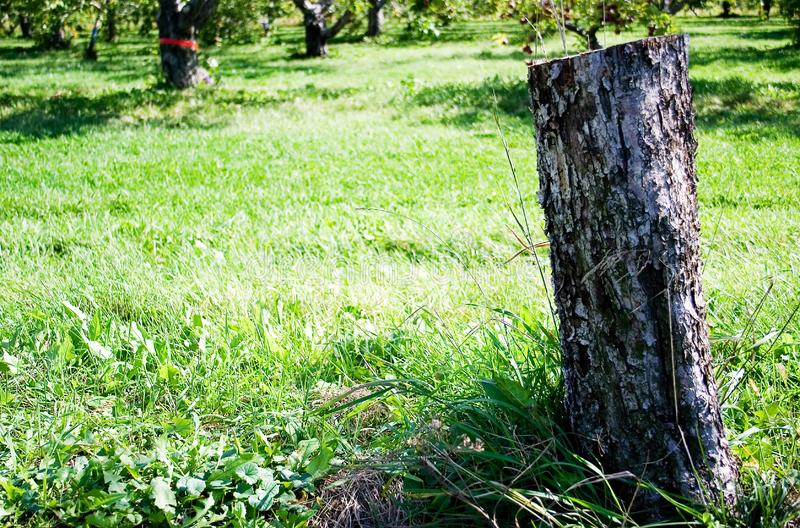 Tronçon d'arbre photos stock