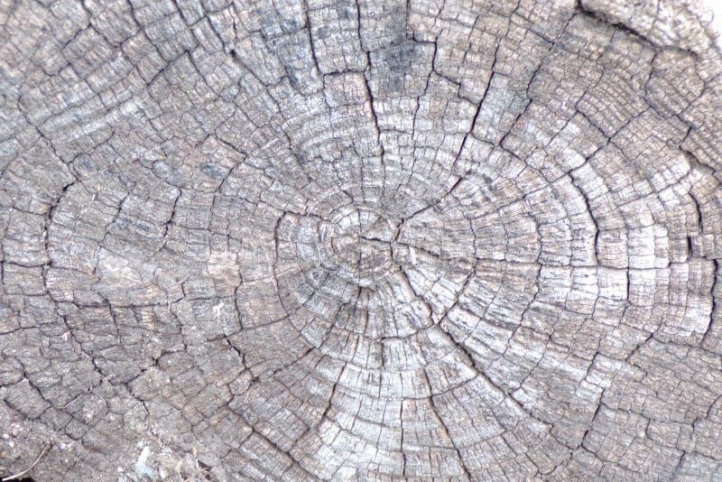 Tronçon d'arbre antique grisonnant dans les éléments images libres de droits