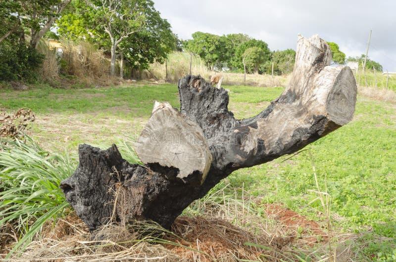 Tronçon d'arbre brûlé photos libres de droits