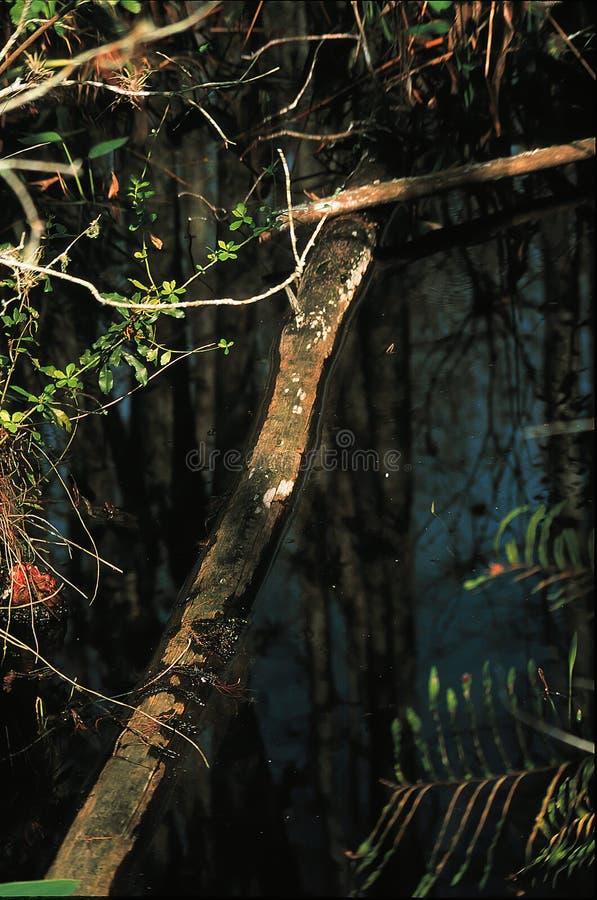 Tronçon d'arbre décomposé images libres de droits