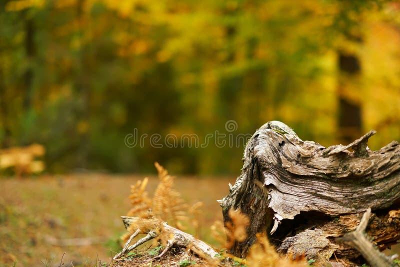 tronçon d'arbre dans la forêt sur le fond brouillé photos libres de droits
