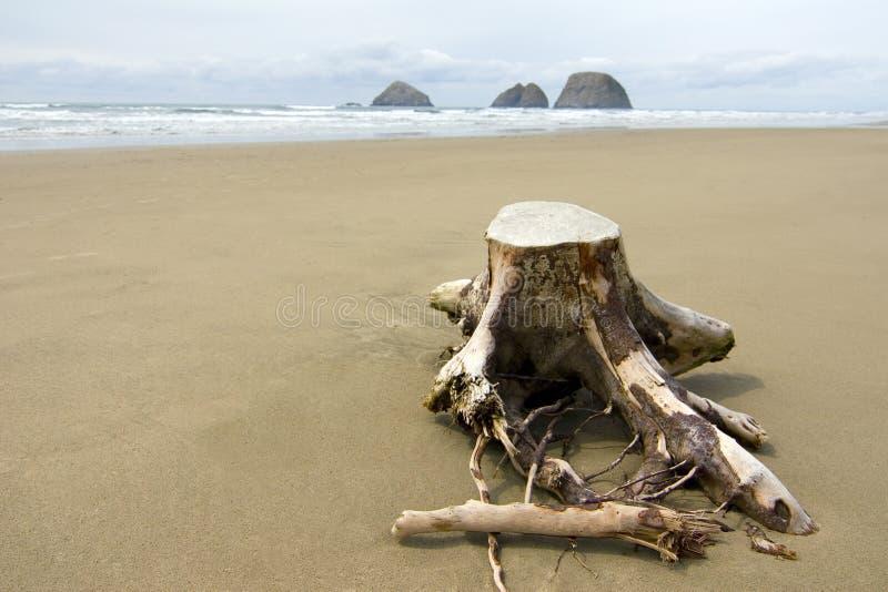Tronçon d'arbre dans le sable photo libre de droits