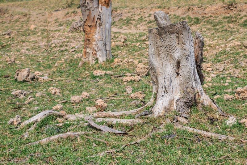 Tronçon d'arbre en parc image libre de droits