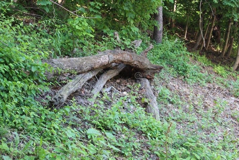 Tronçon d'arbre en parc de Fairmount image stock