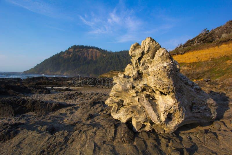 Tronçon d'arbre géant sur la côte de l'Orégon photos stock