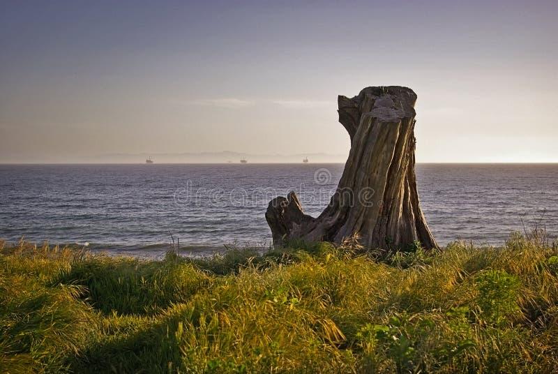 Tronçon d'arbre regardant à l'extérieur à la mer photo libre de droits