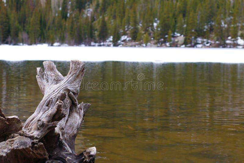 Tronçon dans l'étang photographie stock