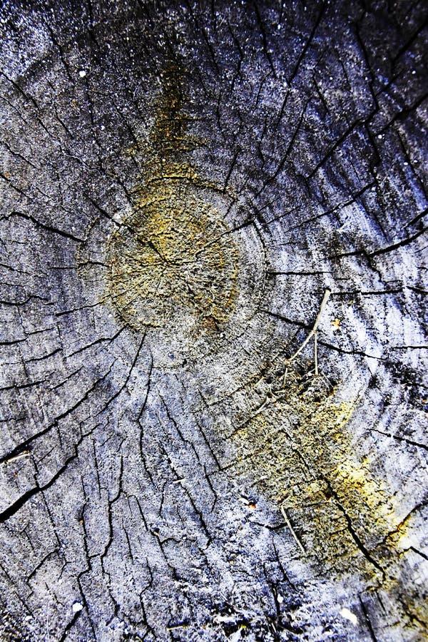 Tronçon en bois fendu, cercles concentriques, moos images libres de droits