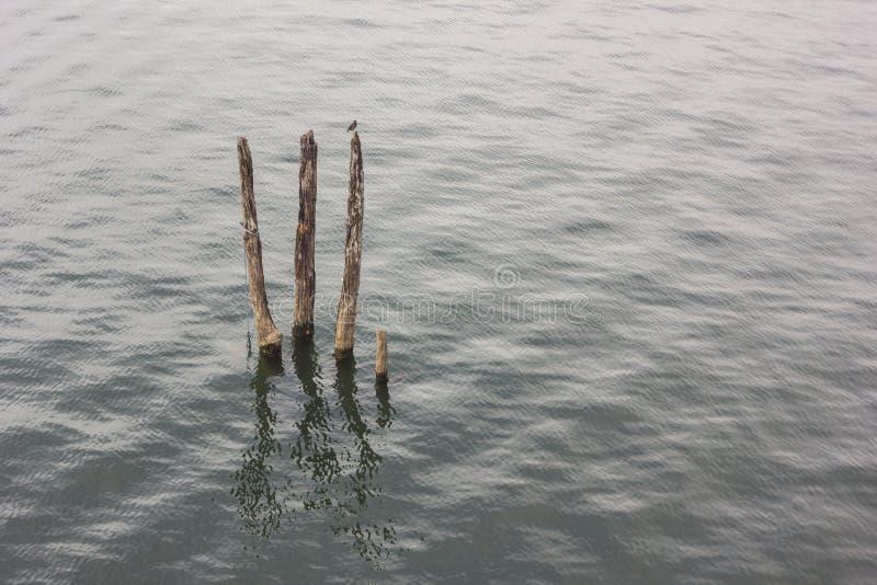 Tronçon en rivière photos stock