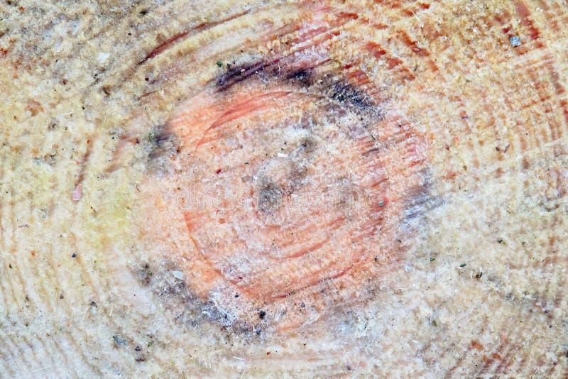 Tronçon réduit de pin gonflé par la résine image libre de droits