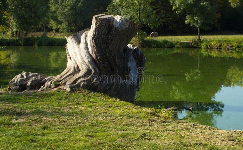 Tronçon sur la banque de la rivière photo libre de droits