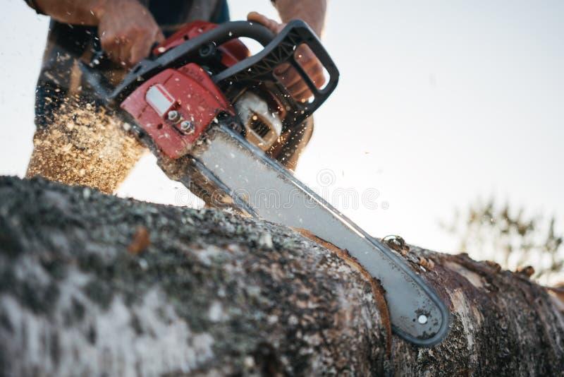 Tronçonneuse dans des mains de bûcheron Bûcheron professionnel sciant un grand arbre utilisant la tronçonneuse image stock