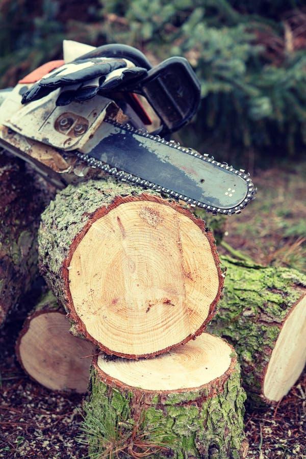Tronçonneuse sur l'arbre abattu frais photos stock