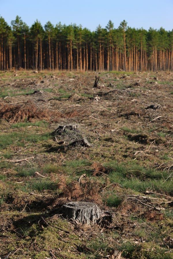 Tronçons d'arbre photos libres de droits