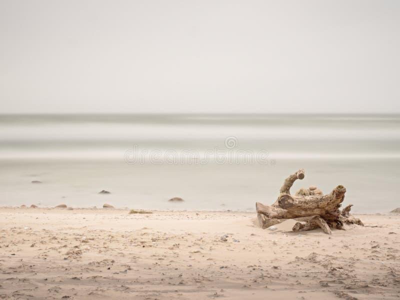 Tronc cassé avec le reste de racines collant du sable par la mer photos stock
