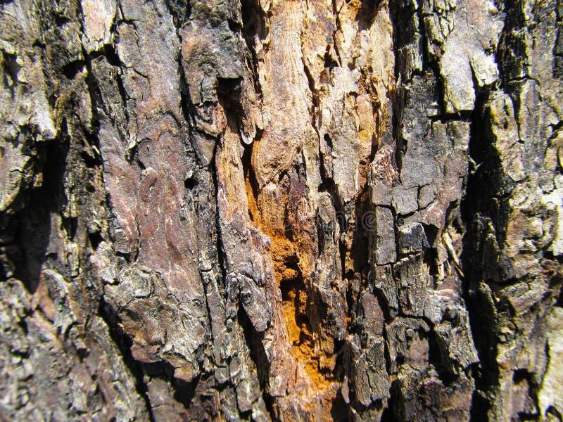 Tronc d'arbre photographie stock