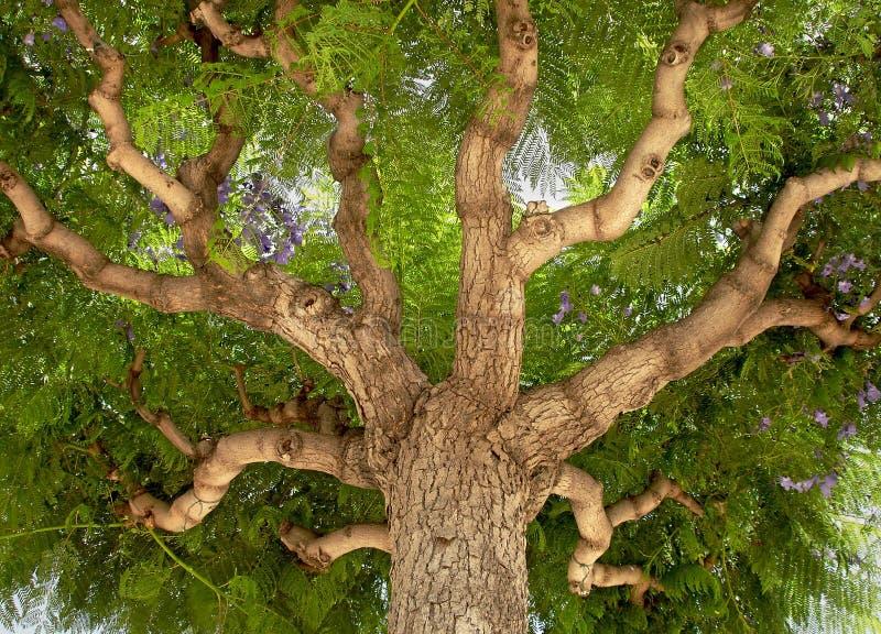 Tronc d'arbre images libres de droits