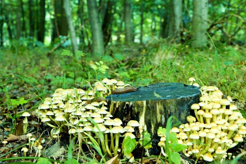 Tronc d'arbre avec des champignons photographie stock libre de droits