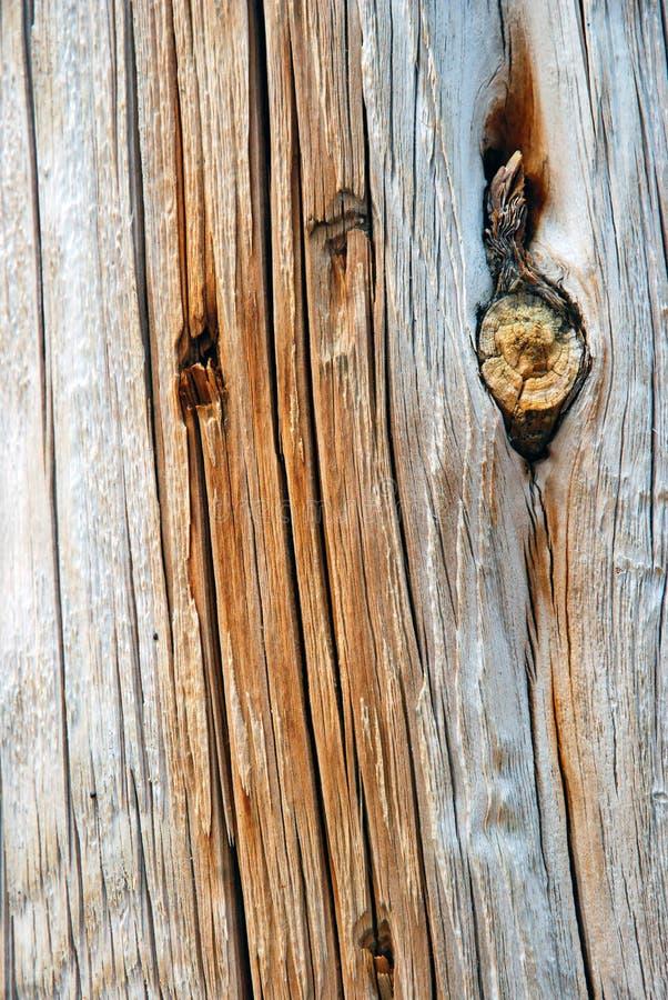 Tronc d'arbre avec le noeud photographie stock