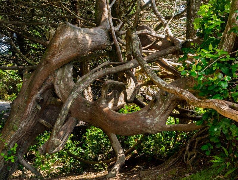 Tronc d'arbre courbé photo stock