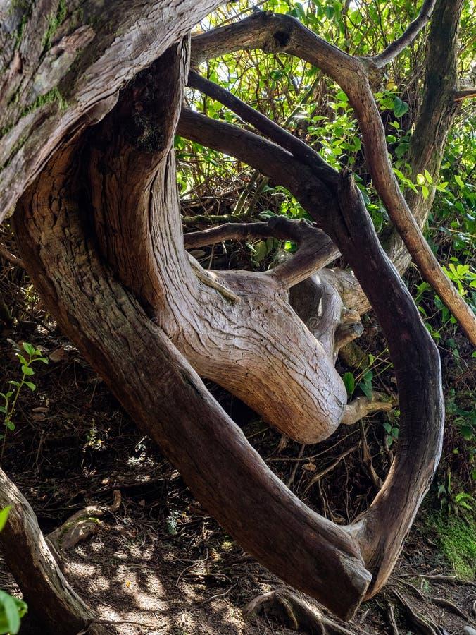 Tronc d'arbre courbé photographie stock libre de droits