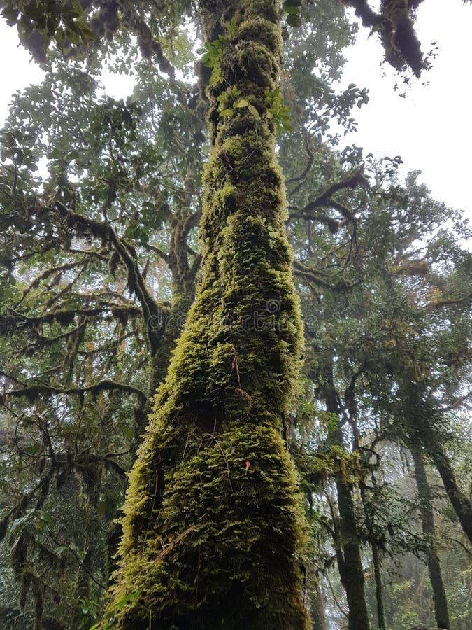 Tronc d'arbre couvert de la mousse image libre de droits